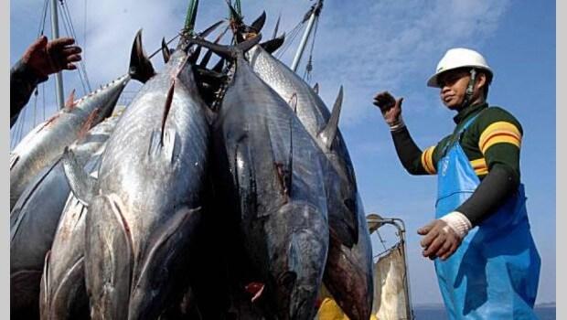 Siapa Sangka! 5 Jenis Ikan Ini Berbahaya Jika Dimakan